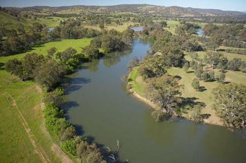 Murray Nehri