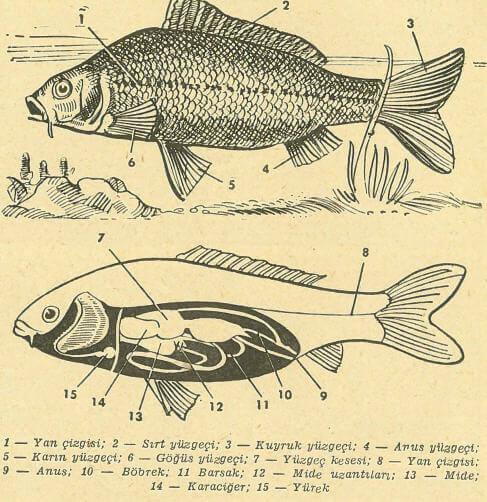 Bir Balığın İçi ve Dışı