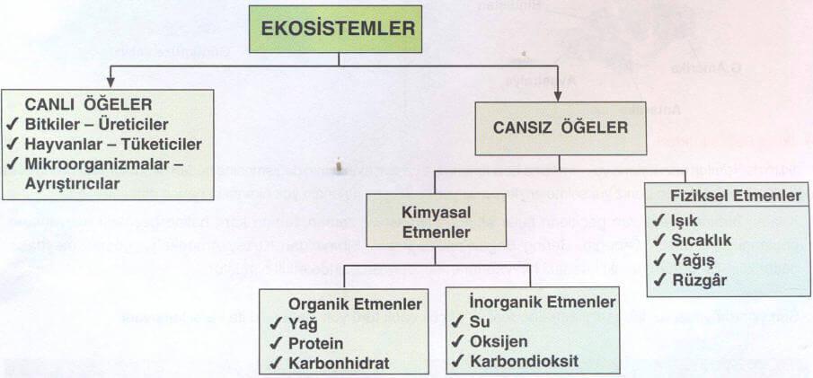 ekosistem-sema-1