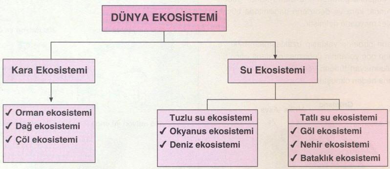 ekosistem-sema-2