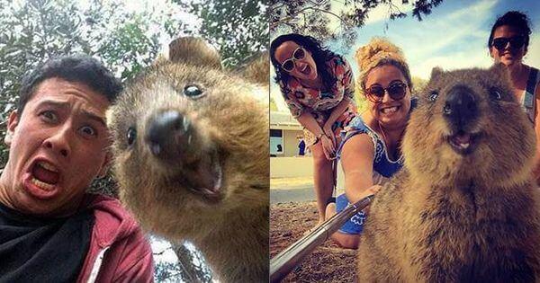 quokka-selfie-1