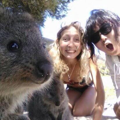 quokka-selfie-5