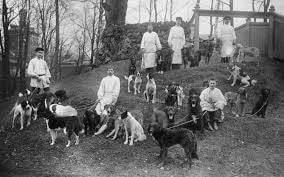 Pavlov'un Köpekleri