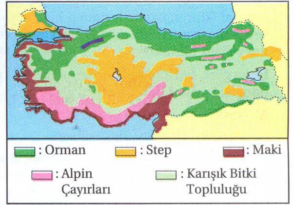 Türkiye Doğal Bitki Örtüsü Haritası