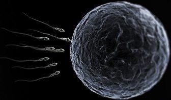 Sperm ve Yumurta