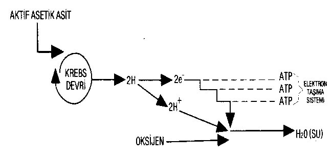 elektron taşıma