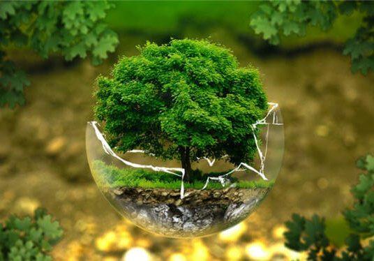 İnsan ve Çevre İlişkisi Konu Anlatımı (7. Sınıf) – Popülasyon, Ekosistem Özellikleri