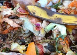Bahçemizin Verimi İçin Kendi Kompostumuzu Yapalım – Püf Noktalar
