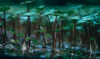 Bitki ve Su