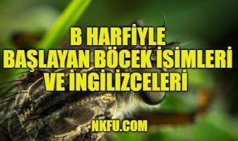 B Harfiyle Böcekler