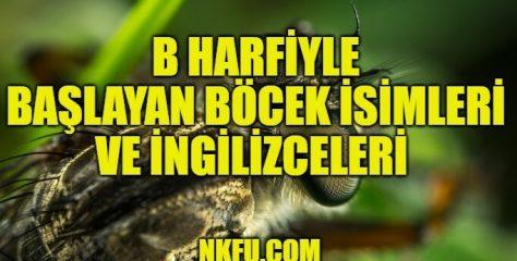 B Harfiyle Başlayan Böcek İsimleri ve İngilizceleri