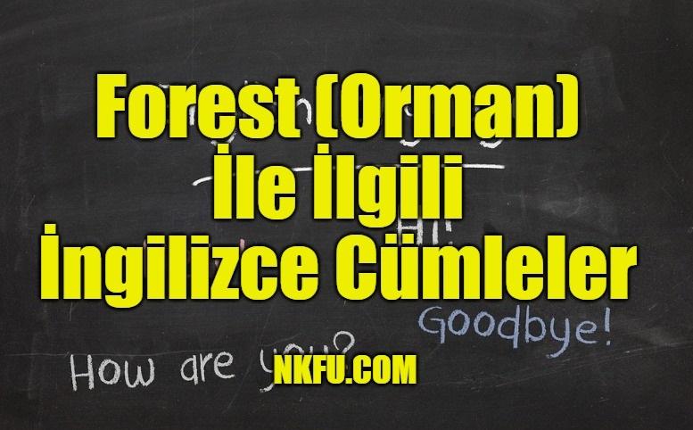 Forest İle İlgili İngilizce Cümleler