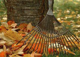 Eylül – Ekim – Kasım Ayında Bahçe Bakımı Nasıl Yapılır? Neler Yapılır?