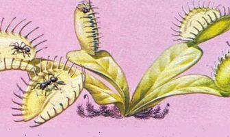 Böcek Yiyen Bitki