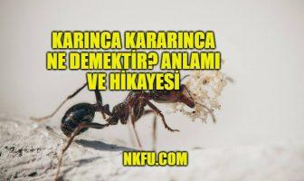 karınca kararınca