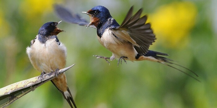 Ötücü Kuşlar