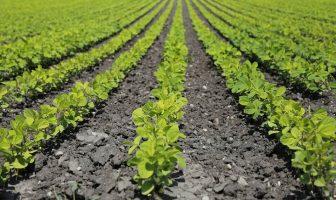 Bitkisel Üretim ve Teknolojileri Bölümü Taban Puanları