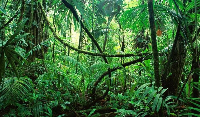 Orman ile ilgili şiirler