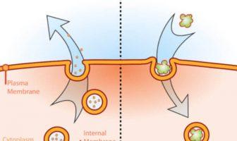 Ekzositoz endositoz
