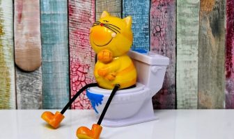 kedi tuvalet