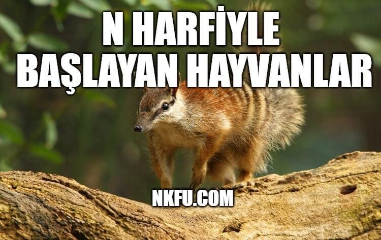 N Harfi İle Başlayan Hayvanlar