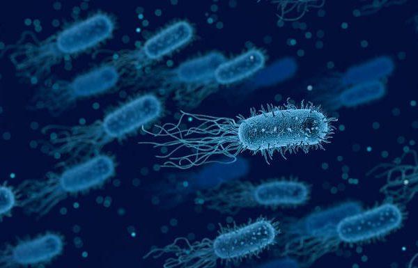 Bakteriler Nasıl Ortamlarda Yaşarlar? Bakterilerin Farklı Habitatları