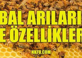 Bal Arısı Nasıl Bir Hayvandır? Nasıl Yaşar ve Bal Yapar? Görevleri Nelerdir?