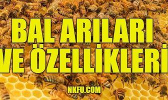 bal arıları