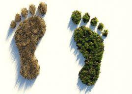 Sera Etkisi ve Karbon Ayak izi Nedir? Artarsa Ne Olur? Nasıl Azaltılır?