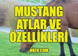 Mustang Atlarının Yapıları, Özellikleri Nelerdir? Mustanglar Hakkında Gerçekler