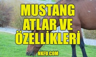 Mustang atları