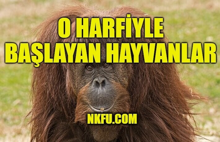 O Harfiyle hayvan