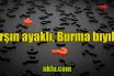 Arşın Ayaklı Burma Bıyıklı