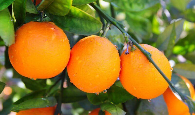 turunç