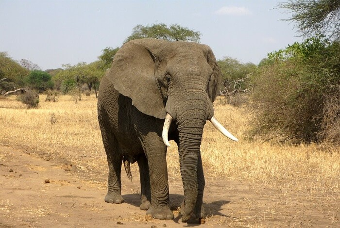 afrika fili