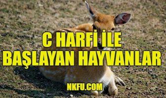 C Harfiyle Başlayan Hayvanlar