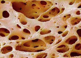 Kemik Dokunun Yapısı ve Özellikleri, Kemik Doku Nedir, Çeşitleri, Yeri
