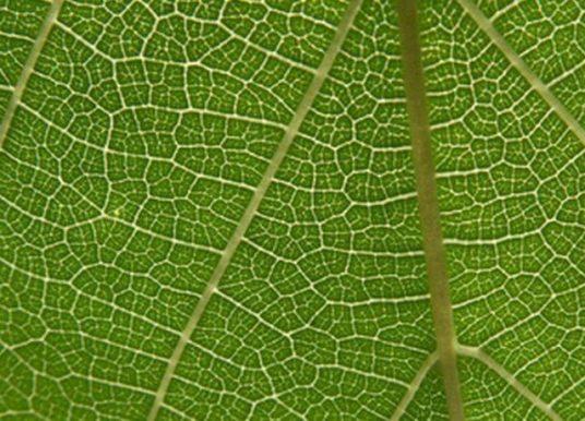 Yaprak Yapısının İncelenmesi Deneyi