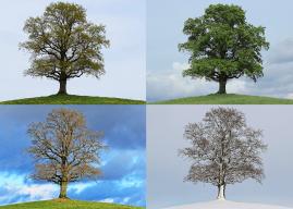 Mevsimler İle İlgili İngilizce Kelime Bulmacaları – İngilizce Bulmacalar