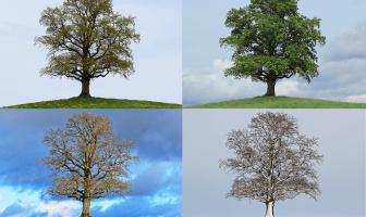 dört mevsim