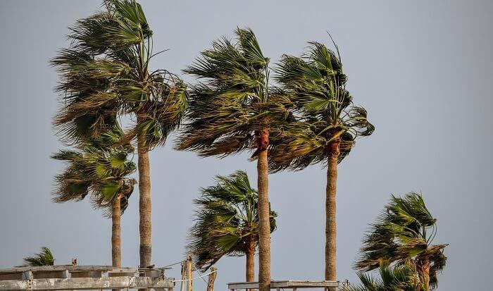 tropikal rüzgar
