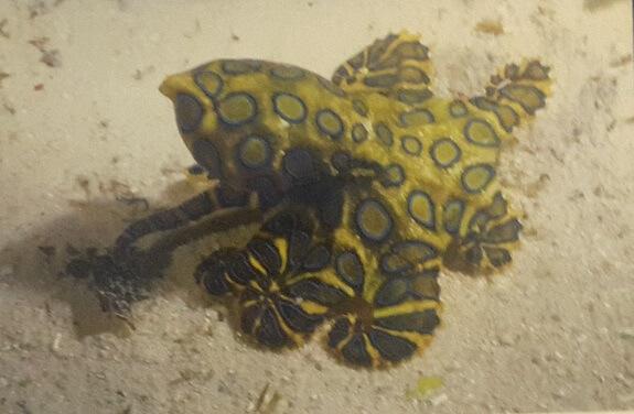 En zehirli deniz canlısı