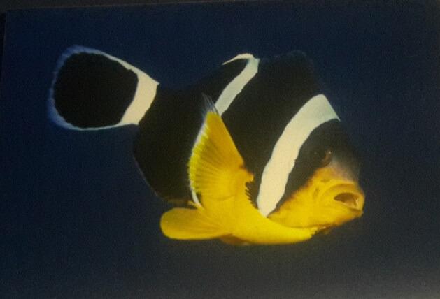 Su içen balık