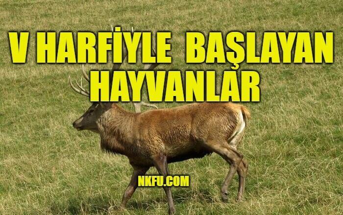 v harfiyle hayvanlar