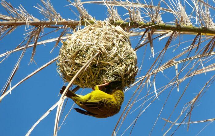 dokumacı kuşu