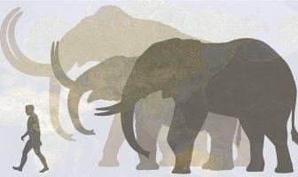 mamut fil