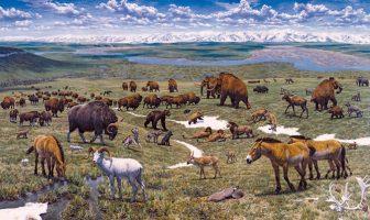 Dünyanın Son Buzul Çağı : Pleistosen Çağı
