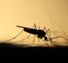 Sıtma Nedir? Nasıl Tedavi Edilir? Nedenleri ve Belirtileri Nelerdir?