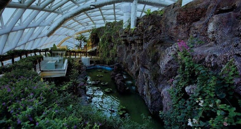 Anadolu'daki Kelebek Cenneti : Konya Tropikal Kelebek Bahçesi