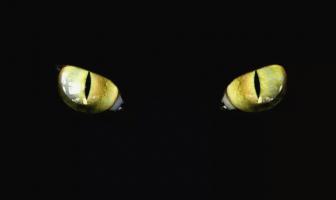 kedi gözleri